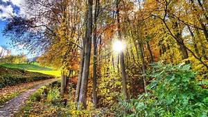 Autumn, Forest, Jungle, Trees, Sunshine, Sunrise, Clearsky