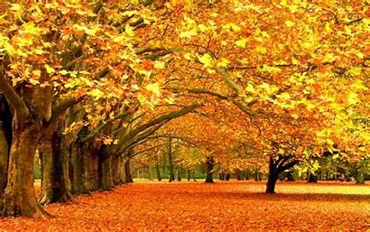 Fall Autumn Trees Foliage Wide 1920 Close