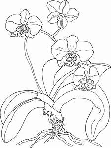 orchid drawing outline - Google Search | Ideas | Pinterest ...