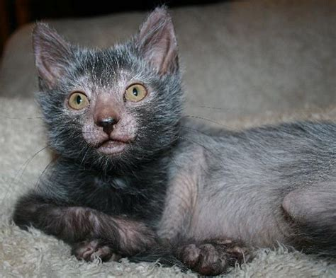 More on the Werewolf Cat HERE