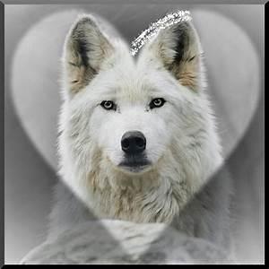 Bébé Loup Blanc : animaux page 8 ~ Farleysfitness.com Idées de Décoration