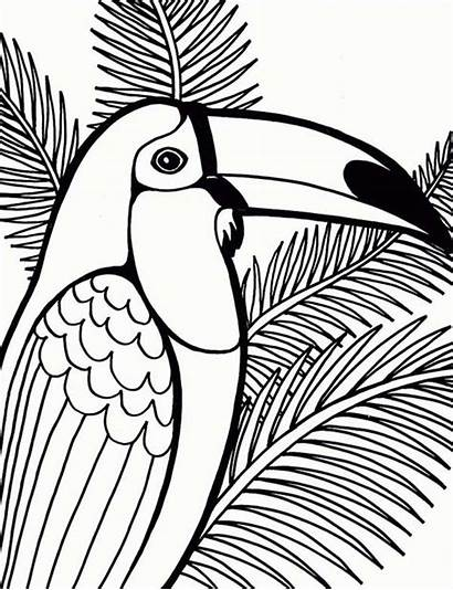 Coloring Bird Pages Parrot Tree Coconut Printable