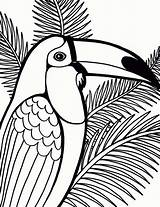 Coloring Pages Bird Parrot Coconut Tree Printable Sheet Detailed Birds Drawings Toucam Coloringpagesfortoddlers Animals Penguin Enregistree Depuis Template sketch template
