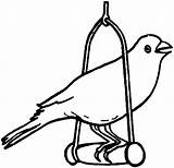 Coloring Bird Pages Canary Pet Robin Pets Drawing Birds Tocolor Printable Wonder Cartoon Getdrawings Colo Getcolorings Place sketch template