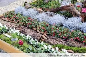 Immergrüne Pflanzen Für Balkonkasten : grabschale herbstlich bepflanzen ideen zur grabgestaltung ~ Markanthonyermac.com Haus und Dekorationen