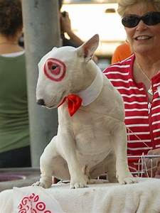 the best costumes for dogs a and a glue gun