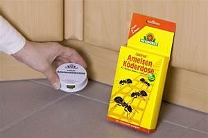 Hausmittel Gegen Ameisen Im Garten : best hausmittel gegen ameisen in der k che contemporary ~ Whattoseeinmadrid.com Haus und Dekorationen