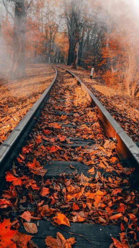 #aesthetic #desktop #forest #full #hd. 10+ Aesthetic Autumn Phone Wallpaper - Venera Wallpaper