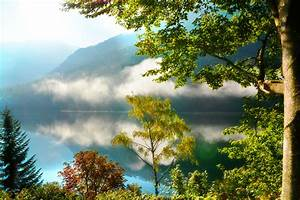 Forest, Morning, Trees, Mountains, Fog, Autumn, Reflection