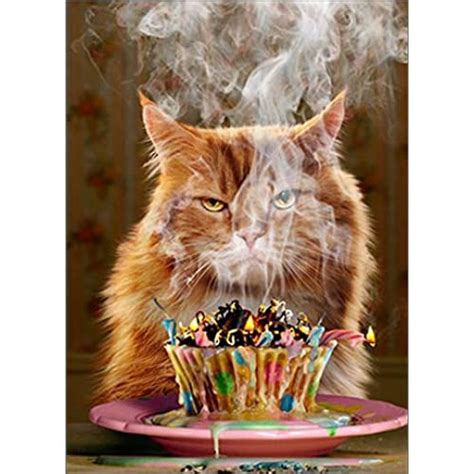 cat birthday card amazoncouk