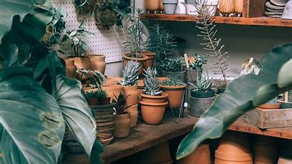 Indoor Plants Pots Wallpapers Cultivation Background Shelves
