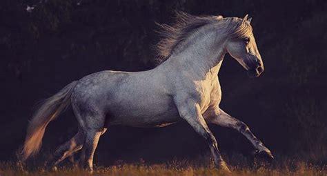 pferde kaufen friesen bilder und sprueche fuer whatsapp