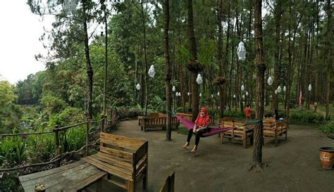 wisata  hutan pinus malang sejuk  asri