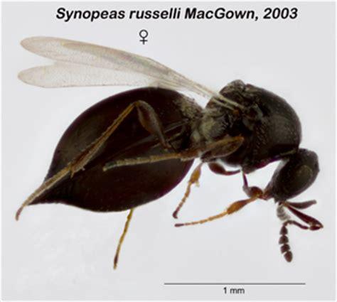 Closet Bug by New Species List Bug Closet