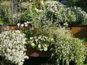Sommerblumen Für Schatten : wei e pflanzen auf dem balkon blumenk sten balkon ~ Michelbontemps.com Haus und Dekorationen