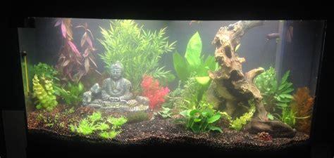 plantes aquarium eau douce plantes aquarium eau douce 28 images plante aquarium eau douce aquariophilie 10 plantes d