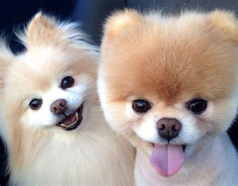 top 10 ra 231 as best dogs for children that don t shed family dogs that