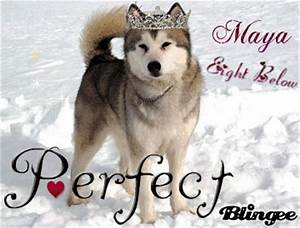 Maya Eight Below Picture #87526304   Blingee.com
