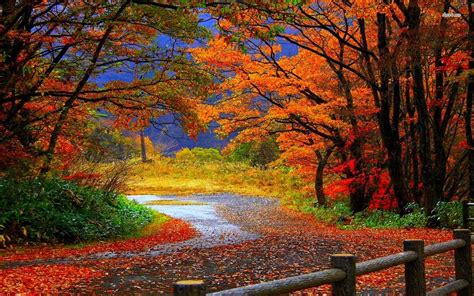 Beautiful Nature Fall Desktop Backgrounds by Fall Nature Trail Centre Craft Desktop