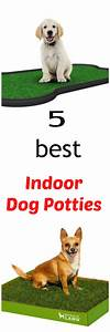 the 25 best indoor dog potty ideas on pinterest With best dog training sites