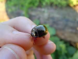 Beetle Identification