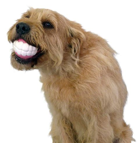 Funny Dog Toy Ball With Teeth