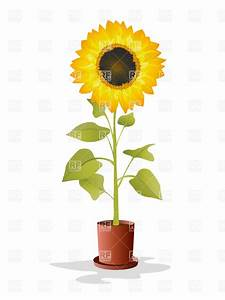 Sunflower in the pot Royalty Free Vector Clip Art Image ...