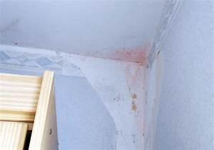 Weißer Schimmel Auf Holz Gefährlich : schwarzer schimmel gef hrlich wei er schimmel ~ Whattoseeinmadrid.com Haus und Dekorationen