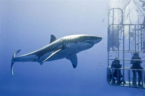 best places to with sharks in the world daily