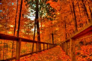 Autumn Background Fall Android