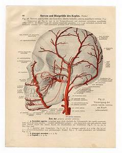 1920s Sickness And Health Print Anatomy Page Poster Chart