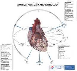 Anatomy of Heart EKG Lead Placement