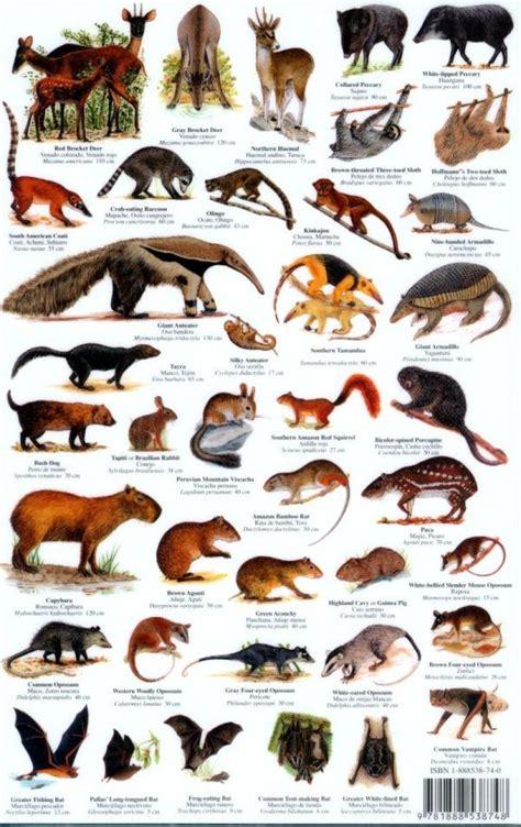 animal chart images  pinterest wild animals