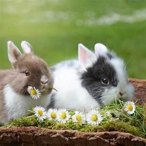 Comment Savoir Si Son Catalyseur Est Bouché : comment savoir si mon lapin est un m le ou une femelle ~ Gottalentnigeria.com Avis de Voitures