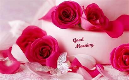 Morning Flowers Rose Flower Gud Roses Wallpapers