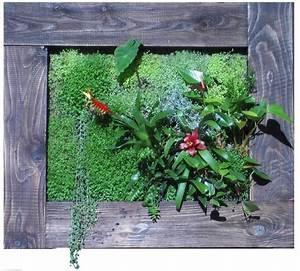 Tableau Végétal Mural : tableau v g talis cadre bois photo de cadre vegetal ~ Premium-room.com Idées de Décoration