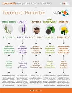 Terpenes  What Can They Do For You