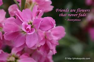 Flower Quotes About Friendship. QuotesGram