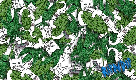 Cool Cat Wallpaper Hd Brotherhood On Twitter Quot What Do You Know About Our Ripndip Quot Sticker Pack Quot Wallpapers For Your