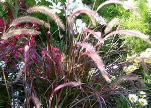 Rotes Gras Winterhart : pflanzenportrait ~ Michelbontemps.com Haus und Dekorationen