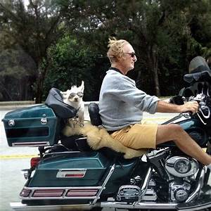 17 Best images about Ruff Ride on Pinterest | Ride along ...