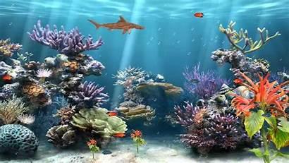 Reef Animated Coral Aquarium Wallpapersafari
