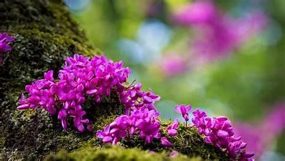 Spring Desktop Flowers Purple Mountain Resolution Wallpapers13