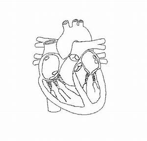 Human Heart Diagram Without Labels Black And White