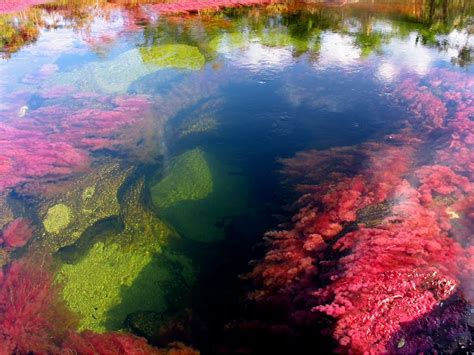 the river of five colors why and how