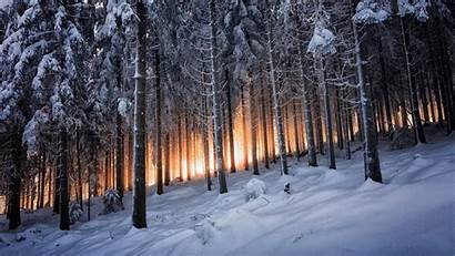 Forest Winter Snow Trees Landscape Nature Pine