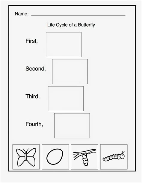cycle butterfly worksheet worksheets for all