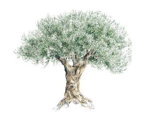 la cuisine d olivier 17 meilleures images 224 propos de oliviers sur olives mars et rugby