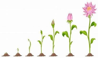 Grow Clipart Ways Growing Flowers Writer Writing