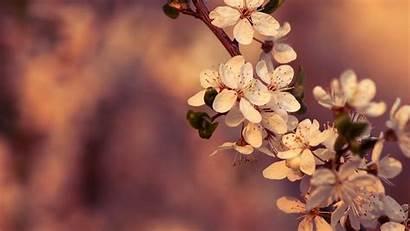 Laptop Flowers Nature Wallpapers Plants Flower Plant